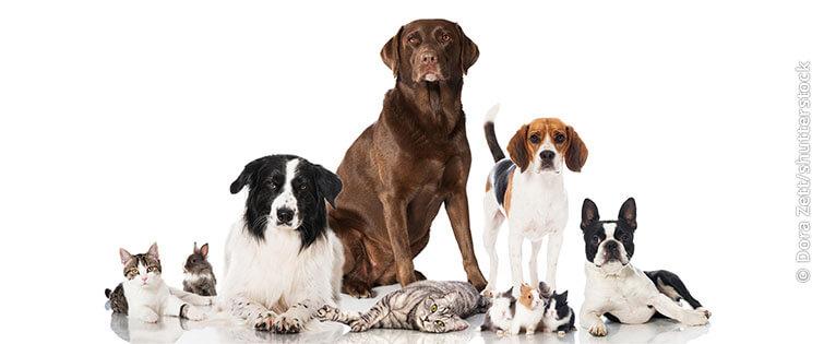 Schwerpunkt Tiergesundheit